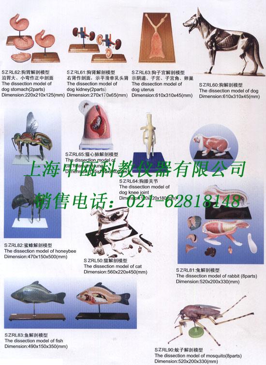 畜牧及动物解剖模型